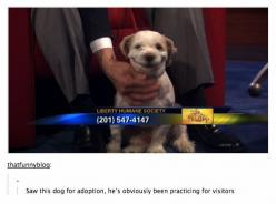 37 Times Tumblr Told The Truth About Dogs: Adoption, Animals, Dogs, Camera, Funny, Photo