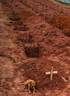 "40 Of The Most Powerful Photographs Ever Taken - A dog named ""Leao"" sits for a second consecutive day at the grave of her owner, who died in the disastrous landslides near Rio de Janiero on January 15, 2011.  (Getty Images / Vanderlei Almeida): De"