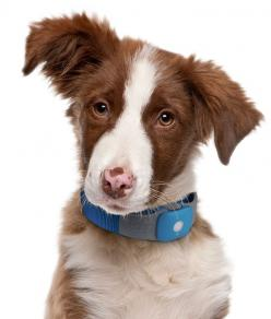 5 Best Pet Tracking Systems  ... see more at PetsLady.com ... The FUN site for Animal Lovers: Dog Behaviors, Dogs, Change Unwanted, Common Dog, Pet, Book, Experts Explain, Ultimate Experts, Explain Common