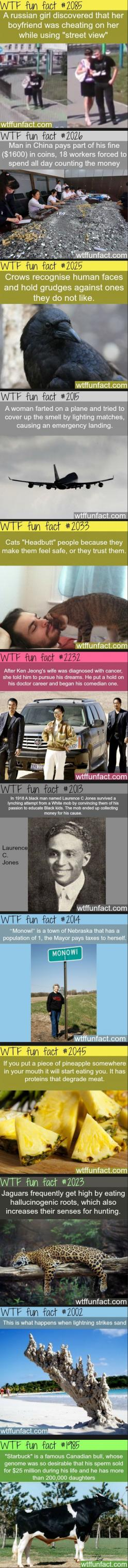 A few fun facts  // funny pictures - funny photos - funny images - funny pics - funny quotes - #lol #humor #funnypictures: Random Fact, Wtf Fun Fact, Wtffacts, Humor Funnypictures, Wtffunfacts, Funny Quotes