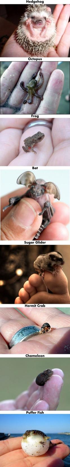 A Few Of My Favorite Baby Animals: Babies, Hedgehog, Cute Baby Animals, Cute Babies, Animal Babies, Tiny Animals