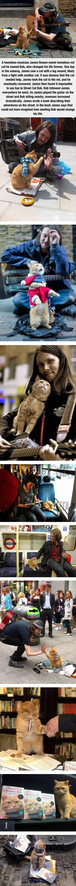 A Homeless Musician And His Cat - This is awesome! :): Cool Cats, Cats Pick, Homeless Musician, Story Musician, Eyes Leak, Cat Cat, Man Cat, Animal