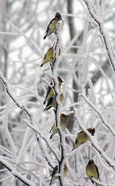 A Tufted Titmouse.: Snow, Winter Wonderland, Fine Art, Chickadee, Birds, Animal