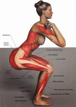 All of the muscles involved in a front squat: Front Squats, Fitness, Workouts, Daily Workout, Exercise, Health
