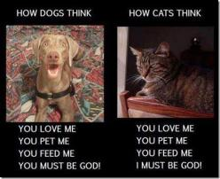 Animal Humor: Animals, Dogs And Cats, Dog Cat, Pets, Funny, So True, Humor, Funnie