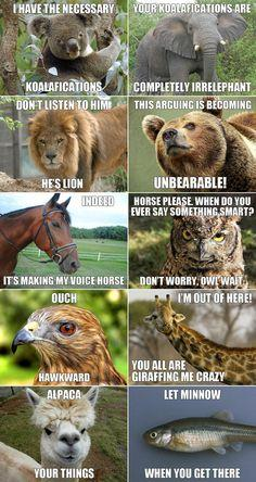 animal memes | Welcome to the water cooler - Funny Pics Thread LOL | Page 57 | 9th ...