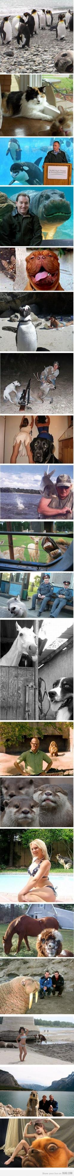 animal photobombs :): Photobombing Animals, Photo Bombs, Funnies, Animals Photobombing, Animalphotobombs, So Funny