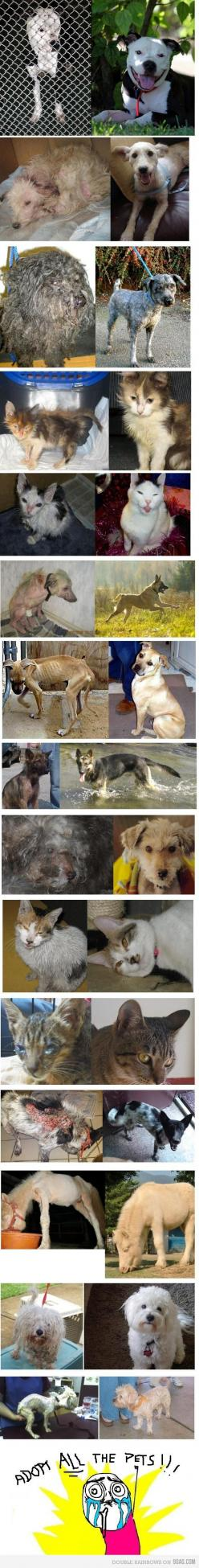 Animals Before and After ~ Great food, fantastic homes and LOVING GUARDIANS make this happen! <3: Rescue Dogs, Animal Rescue, Adoption, Animal Rights, Animal Cruelty, Pets, Animal Abuse, Happy Endings