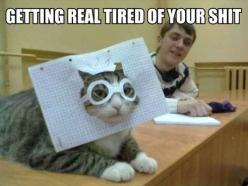 Any cat I've ever known would shred you for doing that to them....: Cats, Animals, Funny Stuff, Humor, Funnies, Things, Real Tired, Kitty