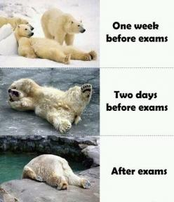 As we approach finals week here at #ovct, we hope you're not like the polar bear in photo 2. Best of luck to all #students !: Polar Bears, Life, School, College, Funny Stuff, So True, Humor