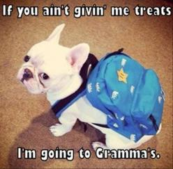 Attack Of The Funny Animals - https://www.etsy.com/listing/187205449/thanks-for-putting-up-with-a?ref=shop_home_feat_3: Funny Animals, French Bulldogs, School, Pet, Things, Frenchie, Grandma