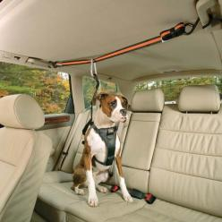 Auto Zip Line - keeps your dog from falling forward if you happen to slam on your brakes. Safety first.: Doggie, Car, Ideas, Dogs, Auto Zip, Pets, Dog Stuff, Animal