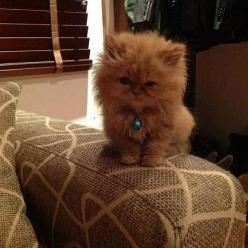 Aww...i want this sweetie!: Kitty Cats, Aww I, Baby, Kittens Cats, Fluffy Kitty, Cats Kittens, Cat Lady, Animal