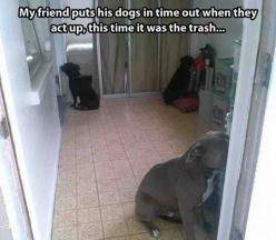 aww lol and they actually listen!! lol cute..better then physical contact for a lesson: Animals, Dogs, Pitbull, Time Out, Pit Bull, Funny Animal, Timeout