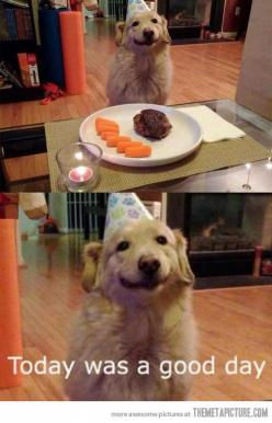 Aww, love his smile :): Face, Happy Birthday, Animals, Dogs, Good Day, Funny, Golden Retriever