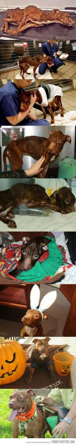 awww: Animals, Dogs, My Heart, Incredible Pitbull, Happy Endings, So Sad