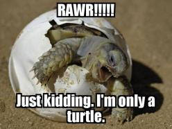 Awww, sweet baby turtle! Stupid crabs try eat baby turtle -.- ill destroy any crab who does -.-: Rawr, Babies, Animals, Funny, Photo, Baby Turtles