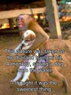 awwwwwww I'm about to cry this is so sweet!!: Picture, Animals, Dogs, Hero, Sweets, Puppy, Things, Monkey Saving