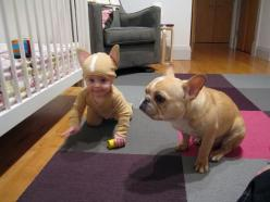 baby french bulldog costume. the end.  @Christine Wilson  Um...wouldn't Harlen be so cute dressed as MONGO?!?!?: Halloween Costume, Twin, Babies, Animals, Costumes, French Bulldogs, Funny, Frenchie, Kid