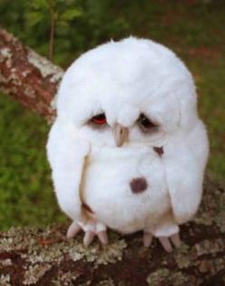 Baby owl!: White Animal, Little Owl, Cutest Pet, Baby Owl, Sad Face, Baby Animal, Pet Owl, Cutest Animal