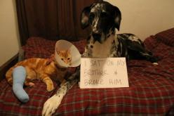 Best dog shaming picture: Animals, Cat, Dog Shaming, Funny, Poor Kitty, Pet Shaming