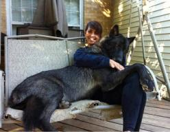 Big, black, wolf-dog hybrid with her master.: Animals, Black Wolf, Dogs, Pet, Wolf Hybrid, Wolfhybrid, Black Wolves