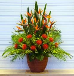 Bird of paradise flower arrangement  www.melbourneflowergallery.com.au: Paradise Flower, Bird Of Paradise Arrangements, Tropical, Flower Arrangements, Ron S Flowers, Floral Designs, Floral Arrangements, Birds Of Paradise Arrangements, Contempory Flowers