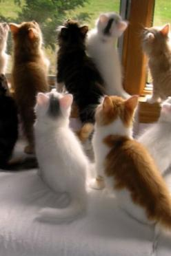 Bird-watching club   ...........click here to find out more     http://googydog.com: Kitty Cats, Window, Bitty Bird, Kitty Kitty, Birdwatching, Kittens, Animals Cats, Bird Watching