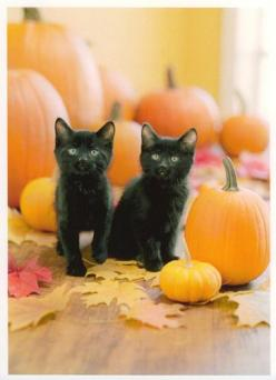 Black cats, pumpkins and a nip in the air--it must be Halloween: Animals, Black Cat Pumpkins, Halloween Cats, Black Kitty, Black Cats, Blackcats, Baby Cats, Happy Halloween