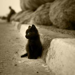 "#black #kitten #luck I will have one. They're good luck in my eyes. I will more-than-likely name her Eshe, which means ""Life"" in Egyptian.: Animals, Cupcake, Tops, Black Cats, Kittens, Top Hats, Kitty, Blackcat"