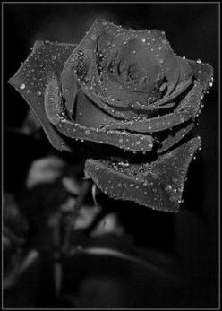 Black Rose: Beauty that does(not) exist - Fun Guerilla: Art Photographs Flowers, Black Beauty, Colors, Black Flowers, Nature Flowers Black, Beautiful Flowers, Dark Roses, Photography, Black Roses