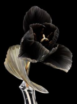 Black tulip...with jewel-encrusted anthers. Or is that a ring? Very Plutonian (Hades ruled the underworld and, hence, all the riches in it).: Black Beauty, Art, White, Black Flowers, Beautiful Flowers, Flower Power, Color Black