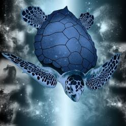 Blue Sea Turtle--the turtle is not actually blue. I checked the original and the photographer took the photo at a Wash., D.C. aquarium, then digitally changed the color.  Very cool...: Sea Life, Animals, Blue Sea, Seaturtles, Nature, Marine Life, Sea Turt