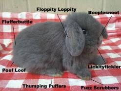 Bunny Anatomy.  Laughed way more than I probably should have..: Rabbit, Animals, Cuteness, Pet, Bunny Anatomy, Funny Stuff, Things, Bunnies, Bunny Parts