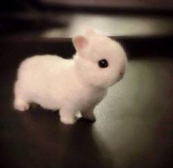 Bunny :): Rabbit, Babies, Adorable Animals, So Cute, Pet, Baby Bunnies, Baby Animals, Cutest Animal