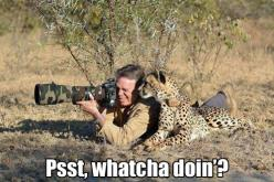Can I see?: Photos, Picture, Cheetah, Shoot Animals, Big Cats, Real Men, Funny Animal, Photography