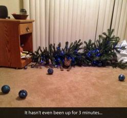 Cat: Cats, Animals, Funny Stuff, Humor, Funnies, Funny Animal, Christmas Trees