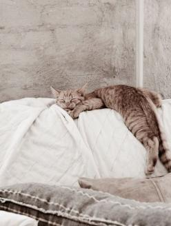 catnap: Cats, Kitty Cat, Animals, Sweet, Daniella Witte, Pet, Cat Naps, Chat