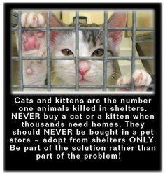 Cats & Kittens are the number one animals killed in shelters - please adopt!