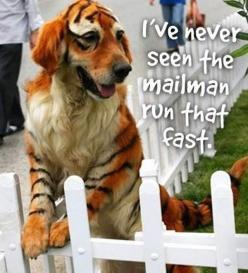 ccccccccccccccooooooooooooooooooolllllllllllll: Funny Animals, Dogs, Pet, Funny Stuff, Funnies, Tigers, Halloween