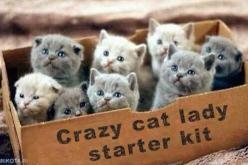 Crate of adorable kittens: Crazy Cats, Lady Starter, Animals, Catlady, Boxes, Kittens, Crazy Cat Lady, Kitty
