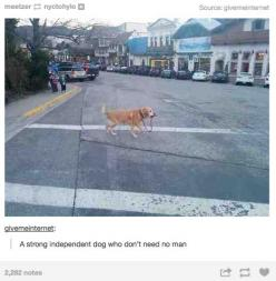 Cute! There's a guy in town who owns a corgi. Doesn't put him on a leash, the dog is very well-behaved and well-trained. He looks both ways before crossing the street.: Dog Walking, Laughing So Hard, Independent Dog, Manly Man, Strong Independent,