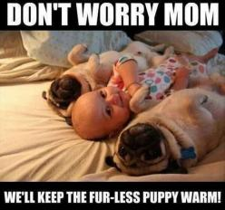 cuuuuuuuuute: Babies, Animals, Dogs, Stuff, Pet, Funny, Puppy, Pugs, Things