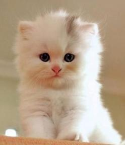Dawww can I have anything I want? Come on u know you want to give me all ur loven!: Kitty Cats, Animals, Sweet, So Cute, Pets, Adorable, Box, Kittens, Kitties