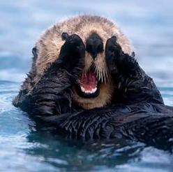 dear santa, i would like a sea otter pup please.: Seaotters, Animals, Stuff, Pet, Funny, Adorable, Things, Smile, Sea Otters