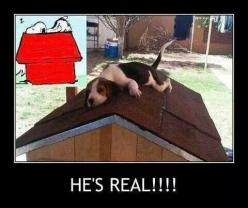 Did you know that Snoopy really exists? :): Animals, Peanut, Dogs, Real Life, He S Real, Pet, Real Snoopy, Beagles, Funny Stuff