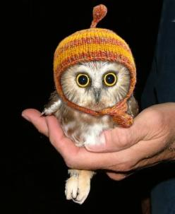 Does it get any cuter....the owl is adorable & with a little hat, seriously, Too cute!: Hats, Babies, Animals, So Cute, Baby Owls, Pet, Things, Babyowl