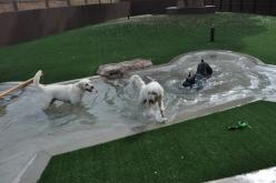 dog pool, maybe not this big but its a great idea, then they will stay out of ours: Pool Idea, Dogs, Doggie Pools, Dog Kennel Beds Ideas, Petite Pools, Dog Pools, Doggie Love Ideas, Friend, Animal