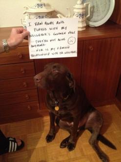 Dog shaming: Dog Shaming, Things Happen, Pets, Play, Funny, Don T, Don'T Like Me, Guinea Pigs