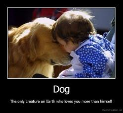 Dogs: Animals, Sweet, Dogs, Quote, Pets, So True, Puppy, Friend